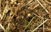 (7)TMR 飼料(ウーロン茶粕利用)