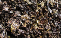 (1)ウーロン茶粕