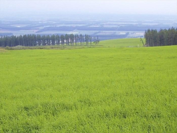 士幌高原牧場